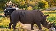 turismo-animal-africa-coronavirus.jpg