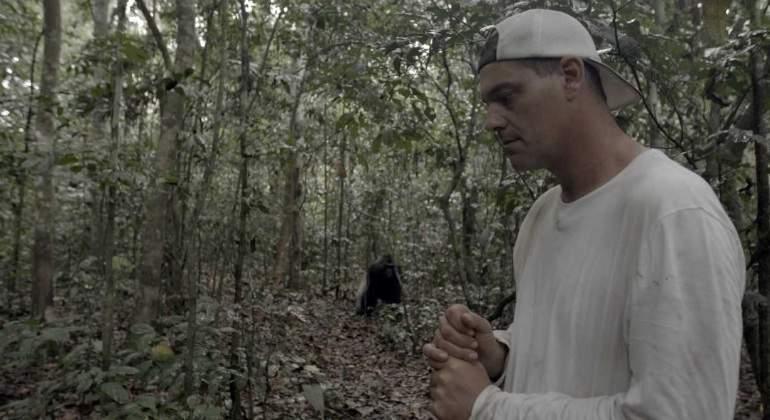frank-cuesta-gorilas.jpg