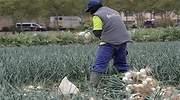 El campo reclama 100.000 peones para asegurar el abastecimiento