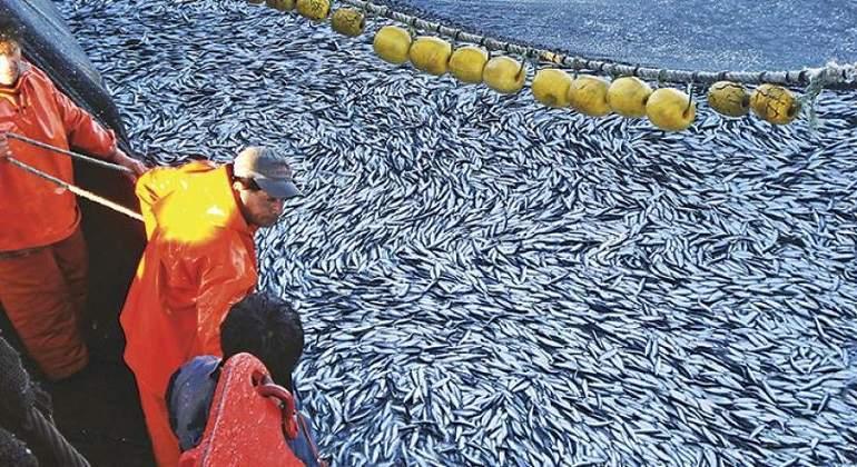 Pesca de anchoveta en zona norte - centro terminará mañana - eleconomistaamerica.pe