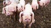 El tratamiento de purines porcinos devuelve 2.000 empleos al campo