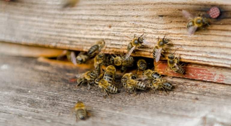 abejas-enjambre-dreams.jpg