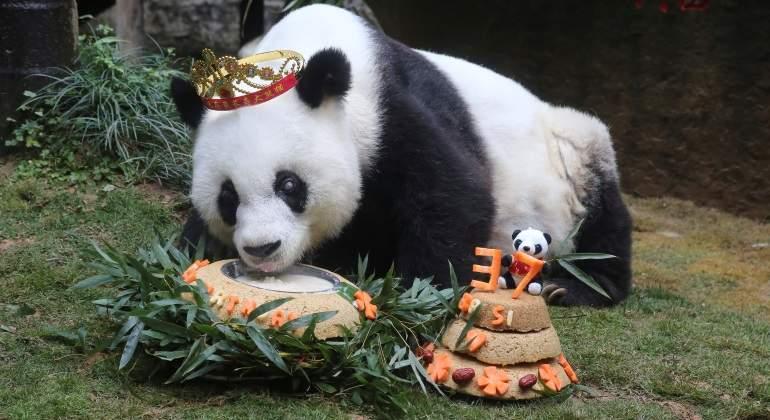 basi-panda-china-37-reuters.jpg