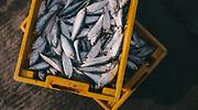 peces-caja-archivo.png