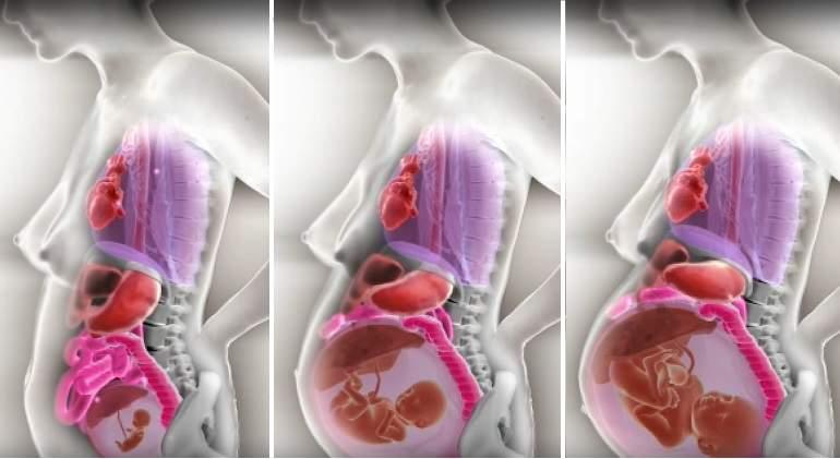 embarazo-fases-organos.jpg
