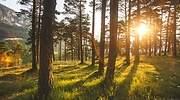 bosque_repsol.jpg