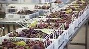 uvas-en-cajas.jpg