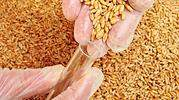 arroz-y-trigo.jpg