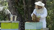 apicultor.png
