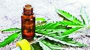cannabismedicinal.jpg