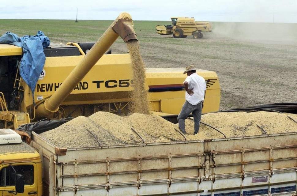 Cayeron las cosechas de soja y maíz