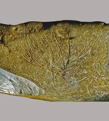 mapa-paleolitico.jpg