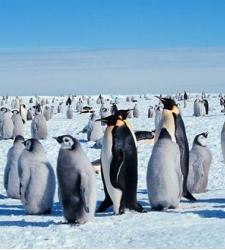 pinguinos-.jpg