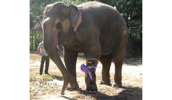 elefante-protesis.jpg