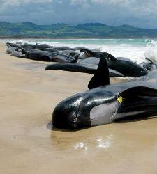 ballenas-varadas2.jpg