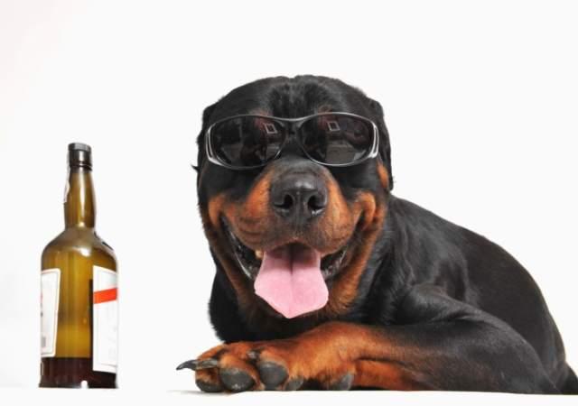 Resultado de imagen para cerveza para perros