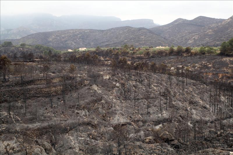La Obra Social La Caixa Destina 450 000 A Recuperar Los Bosques Quemados En Tarragona Ecodiario Es